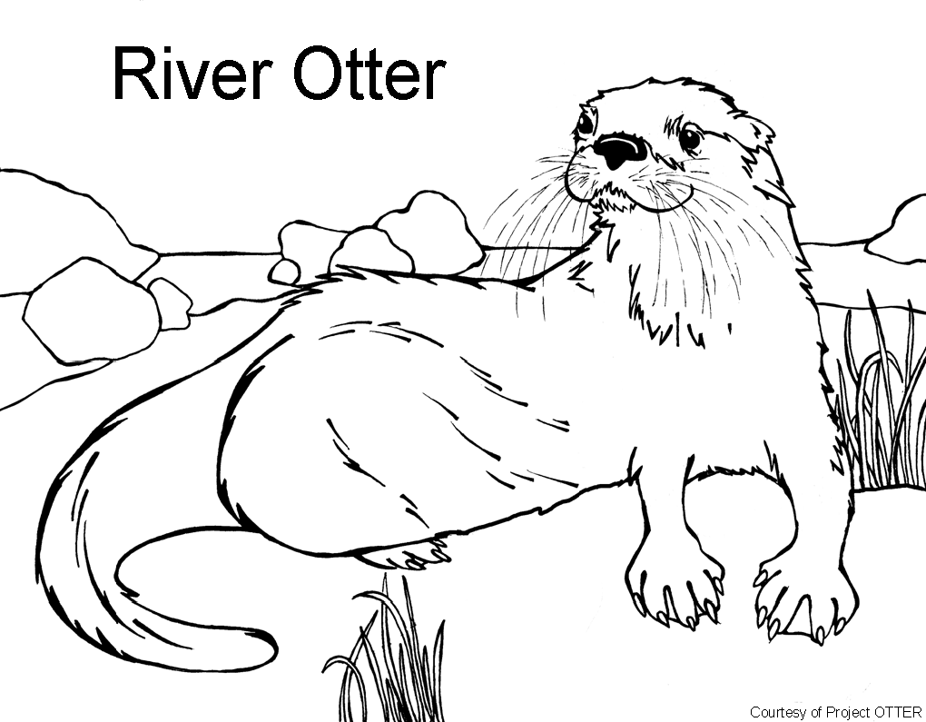IUCN Otter Specialist Group: Education Resources