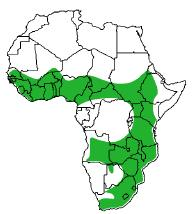 Map of Africa showing species found in south-east and east Africa, and north of the rainforest belt, south of the Sahara
