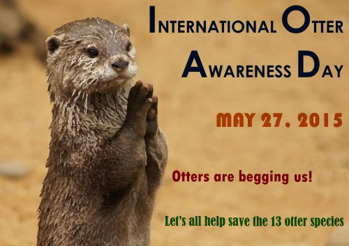 International Otter Day