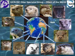 Click on otter to go to species page